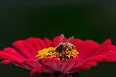 cvetni prah